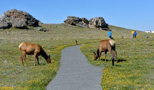 Elk_RMNP-CO_LAH_9156