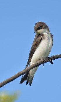 Swallow_LakeManitou-CO_LAH_1929