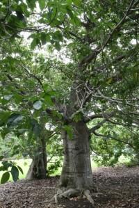 botanicgardens-singapore_lah_7067