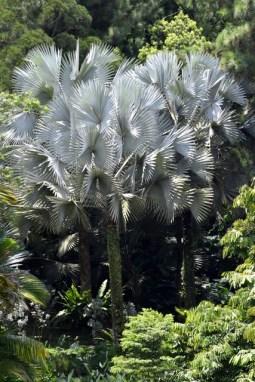 botanicgardens-singapore_lah_7432