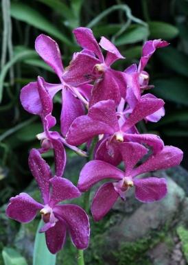 botanicgardens-singapore_lah_7586