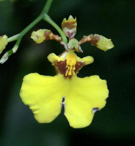 botanicgardens-singapore_lah_7595