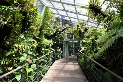 botanicgardens-singapore_lah_7662