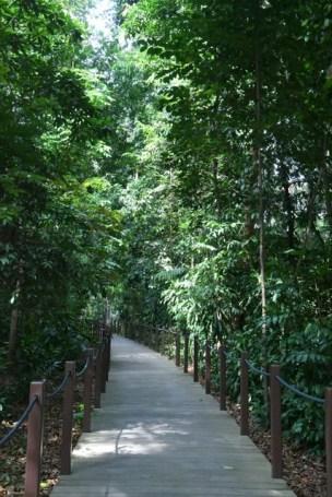 botanicgardens-singapore_lah_7744