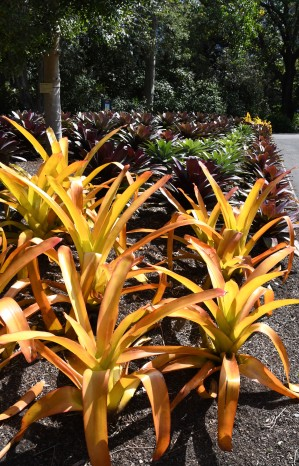 royalbotanicgardens-sydney-nsw-australia_lah_7072-copy