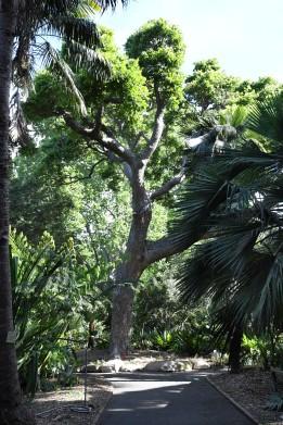 royalbotanicgardens-sydney-nsw-australia_lah_7207