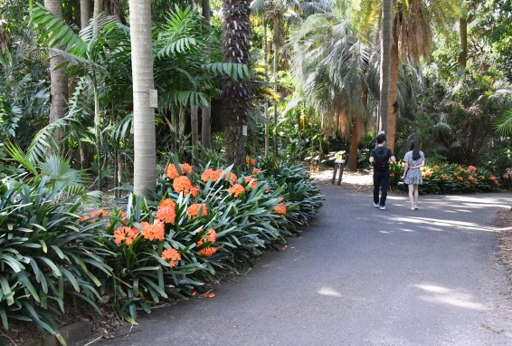 royalbotanicgardens-sydney-nsw-australia_lah_7215