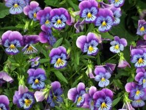 viola-dbg-2008jun26-lah-009