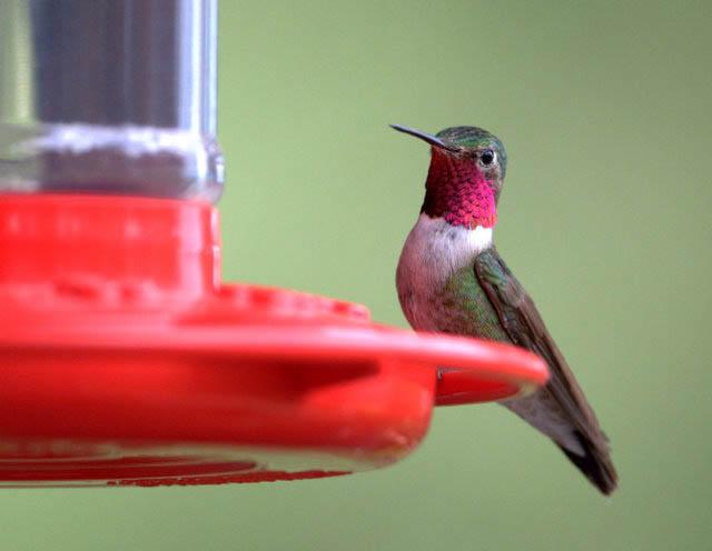 Respuestas del Hummingbird Expert: Spring 2015