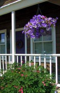 Hanging baskets - Petunias @CrestedButteCO_2008jul13_LAH_316
