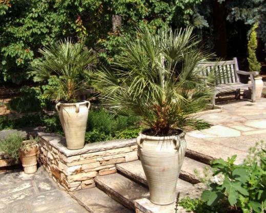 Palms in urns @DBG 2008jun26 LAH 178r