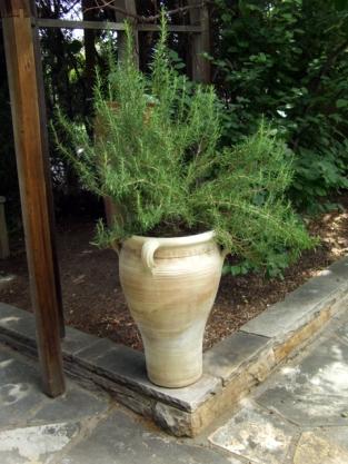 Rosemary in urn @DBG 2008jun26 LAH 181r