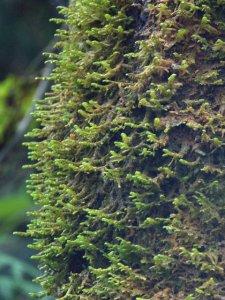 _Wetlands-FedWay-WA_20091022_LAH_5268