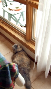 Misty looking at birds @home 2008mar02 LAH 619r