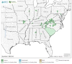 American Barberry map