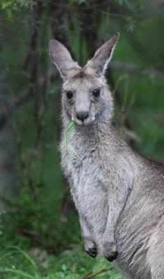 bluemtnsnp-nsw-australia_lah_1743