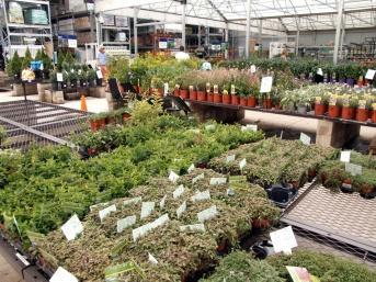 Plants for sale @Lowe's-CS_2008aug02_LAH_5093