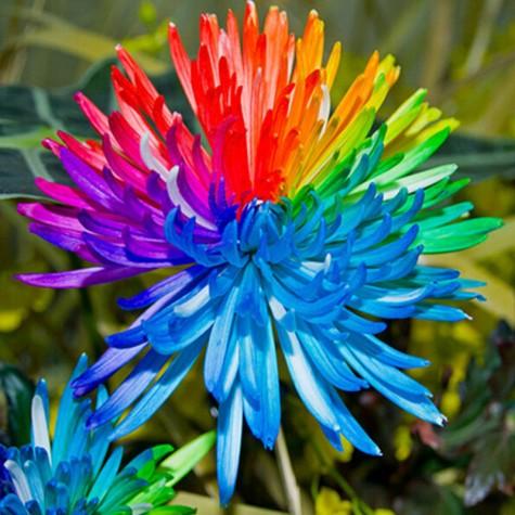 rainbow mum