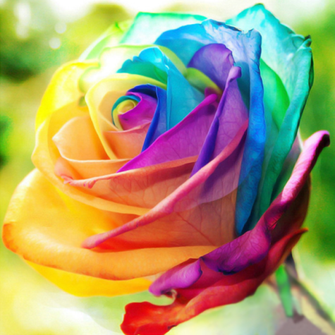 rainbow rose rosesmart_grande_281b6c58-1728-4a3b-b29a-2bb7812ea033_1024x1024@2x