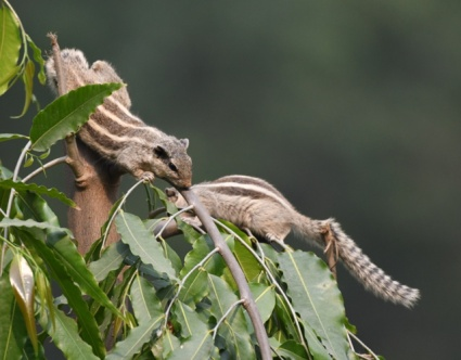 Lodhi Gardens-NewDelhi-India_LAH_9484