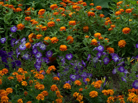 Orange and Purple border_DBG_LAH_7004-001
