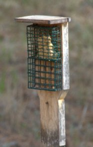 Suet Feeder_BlkForest-CO_LAH_3393