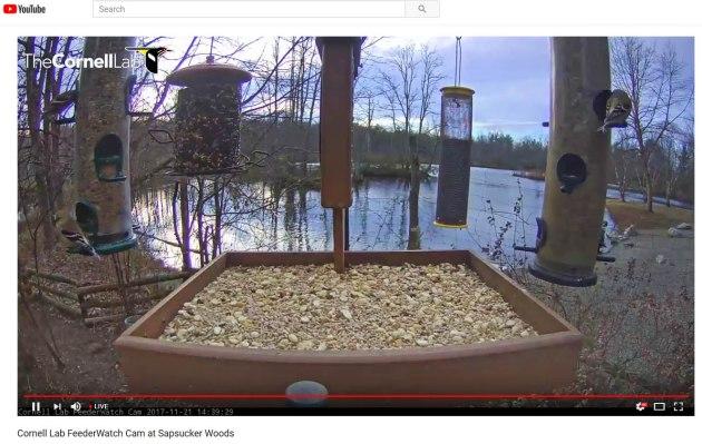 web cam - new york sapsucker woods