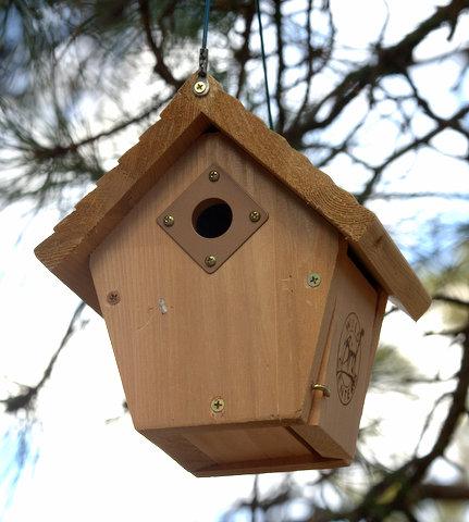 Wren box_BlkForest_20100401_LAH_1227