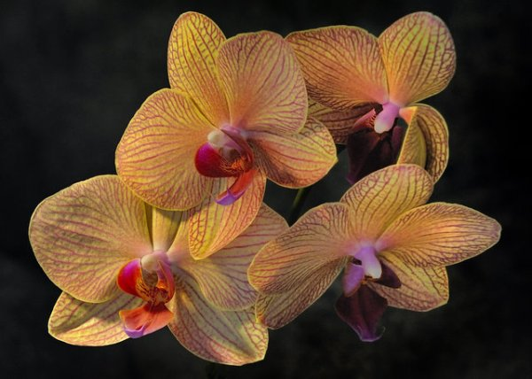 Orchid_2943_filt_rel