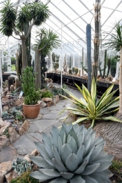 Conservatory - VolunteerPark-Seattle-WA_LAH_0398