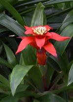 Conservatory - VolunteerPark-Seattle-WA_LAH_0434