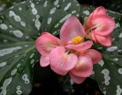 Conservatory - VolunteerPark-Seattle-WA_LAH_0471
