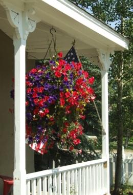 Hanging baskets - Petunias @CrestedButteCO_2008jul13_LAH_318