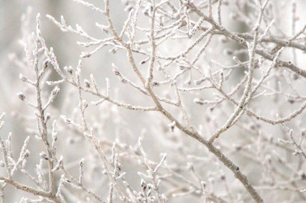 Hoar frost_LaVeta-CO_LAH_2371