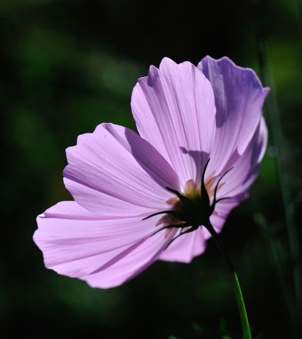 Cosmos_DBG-CO_LAH_9165