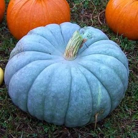 fake blue pumpkin