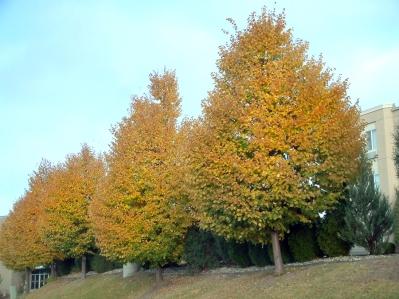 fall color @KellyJohnsonBlvd, ColoSpgs 22oct2005 LAH 113r