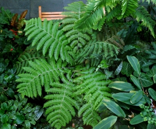 Fern from above @DC LAH 086