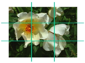 rule of thirds - rose