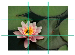 rule of thirds - waterlily