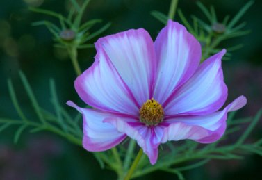 Cosmos_DBG-CO_LAH_9131