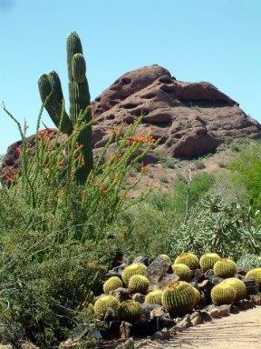 Sonoran Desert @PBG 2004apr18 LAH 006