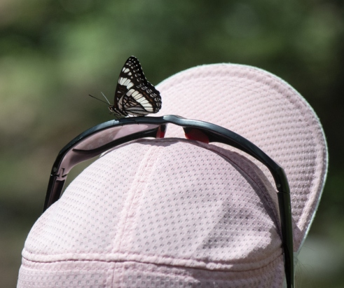 Butterfly on hat_Emerald Valley-EPCo-CO_LAH_5472