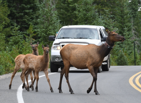Elk_RMNP-CO_LAH_7181