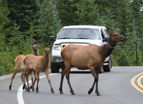 Elk_RMNP-CO_LAH_7181