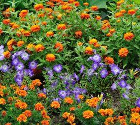 Orange and Purple border_DBG_LAH_7004