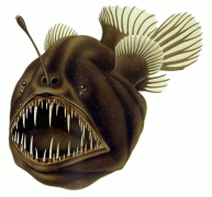 Humpback_anglerfish