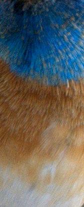 Lazuli Bunting_Patagonia-AZ_LAH_3696