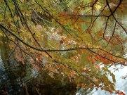 682 Fall foliage