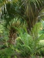 San Antonio Botanic Gardens_DSCF0692